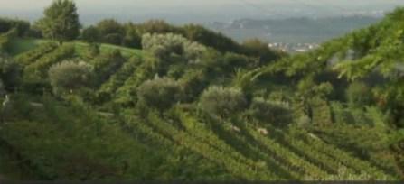 2015-04-07 20_25_41-Video Rai.TV - Signori del vino - Signori del vino del 21_03_2015 - Veneto