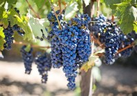 La carta dei vini del piemonte