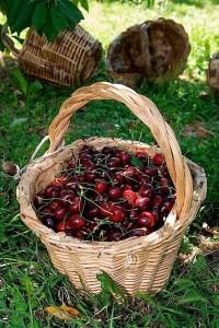 cesto ciliegia di vignola