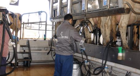 García Tejerina: El Gobierno lleva más de tres años adoptando medidas para dar viabilidad al sector lácteo en un escenario sin cuotas