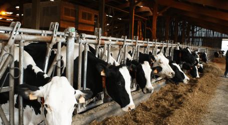 En 2018 las emisiones en la  ganadería española supusieron el 8,9% del total de gases de efecto invernadero y un 61,3% del metano de origen antropogénico.