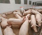 Veterindustria crea un Grupo de Trabajo de nutracéuticos veterinarios