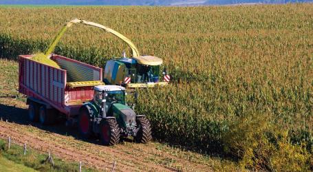 La encuesta de micotoxinas NUTRIAD concluyó que la cosecha 2016 de maíz en  España fue de calidad media en términos de contaminación por micotoxinas