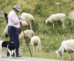 El mundo rural y la ganadería claves en la mitigación de incendios forestales