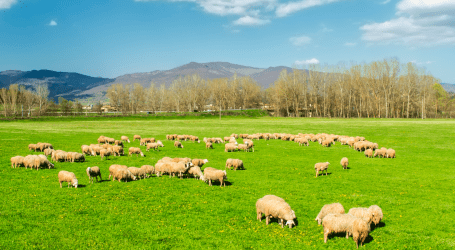 Las exportaciones de ovino se disparan en la UE un 21 %