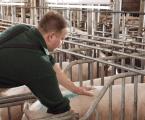 La inseminación de las cerdas a tiempo fijo, una realidad en el progreso de la Reproducción