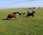 COP25: El sector del vacuno de carne refuerza su compromiso con la conservación del medio ambiente