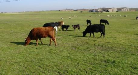 Los actores más relevantes del sector se unen a Animal Hub y defienden la necesidad de asegurar el bienestar animal