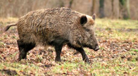 MSD Animal Health incide en la prevención en el Día Mundial de las Zoonosis