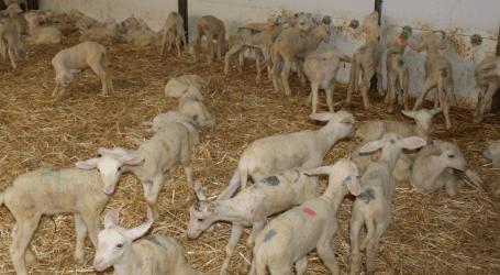 De Heus Nutrición Animal presenta con gran éxito el Plan 360 de Recría de Corderas y Cabritas