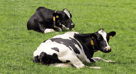 Selladores internos de pezones para garantizar un secado selectivo seguro y así hacer un uso responsable de antibióticos en vacuno lechero