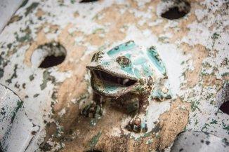 Décoration grenouille