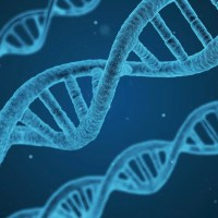 los organismos modificados genéticamente generan dudas