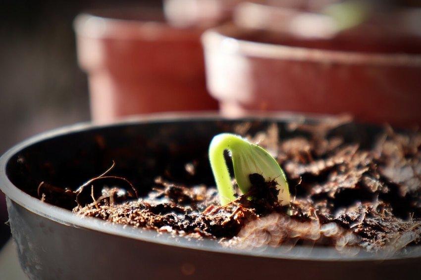 topfpflanze hochbeet alternative