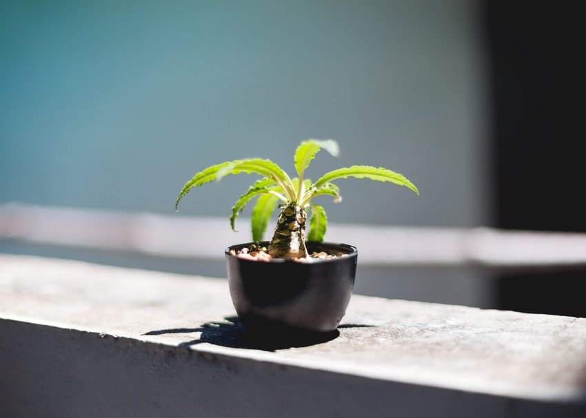 pflanze zierbrunnen hydrokultur