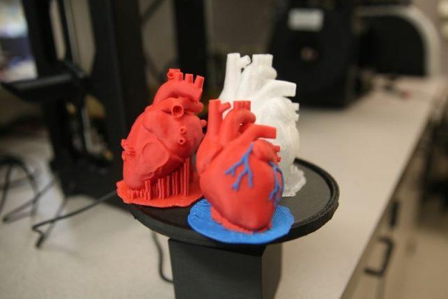 órgãos feitos com a impressão 3D