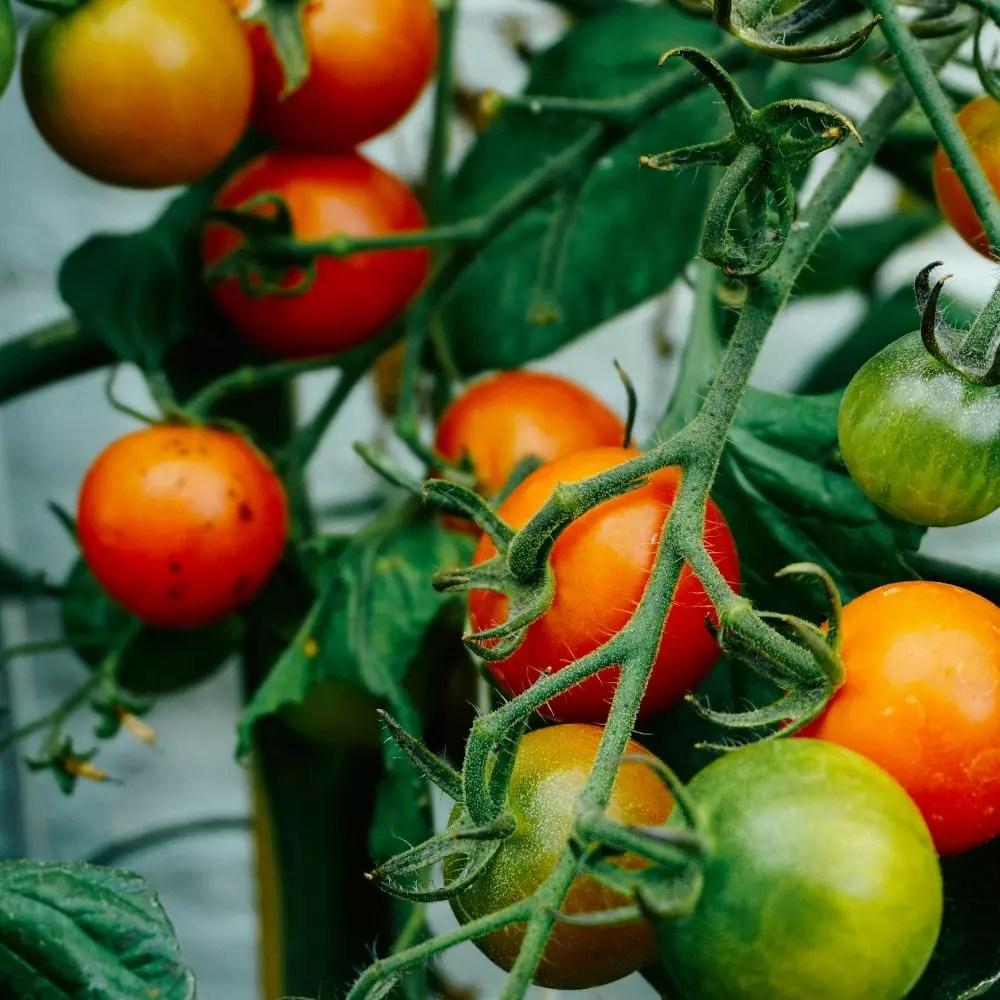 ProE Bioenergie Biokohle Landwirtschaft