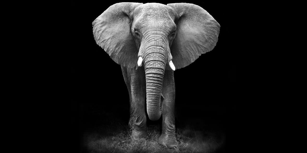 13 janvier 1944 : l'éléphant dans son barnum (âmes sensibles s'abstenir)