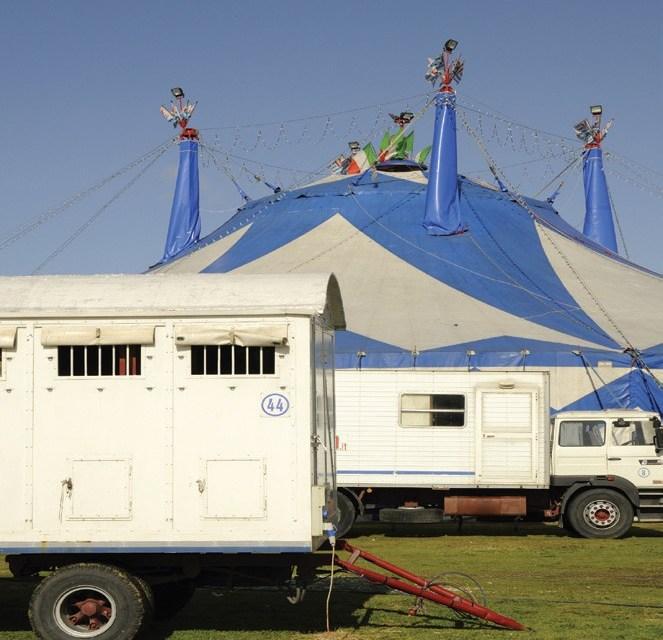 Les cirques en tournée : comment ça marche ?