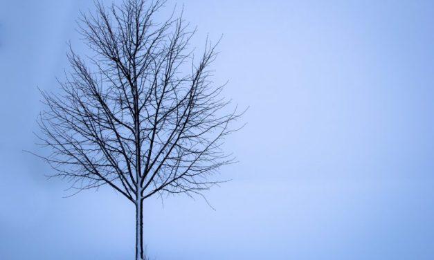 L'hiver invincible de Chestov : une colonne vertébrale possible