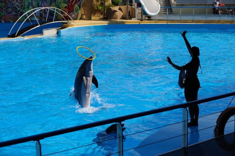 Marineland, parc d'attraction de la Côte-d'Azur, recrute un régisseur audiovisuel (f/h)