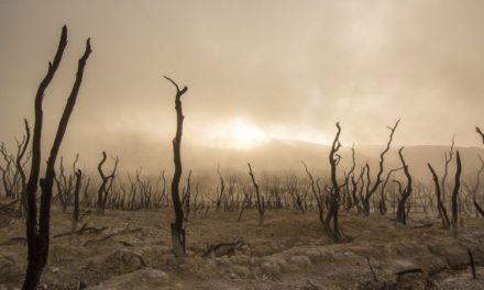 Monde du spectacle : «Une oasis d'horreur dans un désert d'ennui» ?