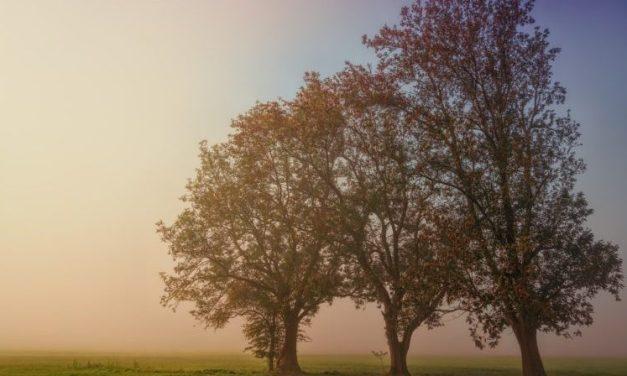 Pays-de-la-Loire : développement de l'action culturelle et artistique dans l'espace rural