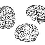 Tre cervelli per un solo acquisto?
