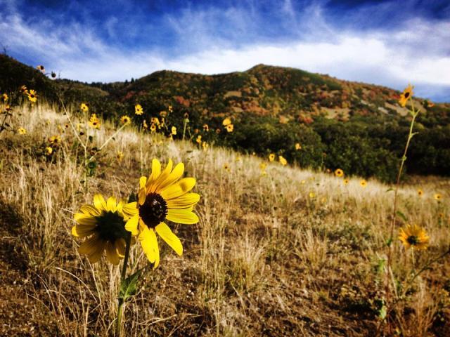 18 September 2013 Davis Creek Canyon2