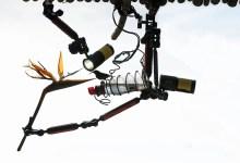 Photo of مصور يستخدم هذه المعدات لالتقاط صور مذهلة للطيور في حديقته.. شاهدوا نتائج التصوير