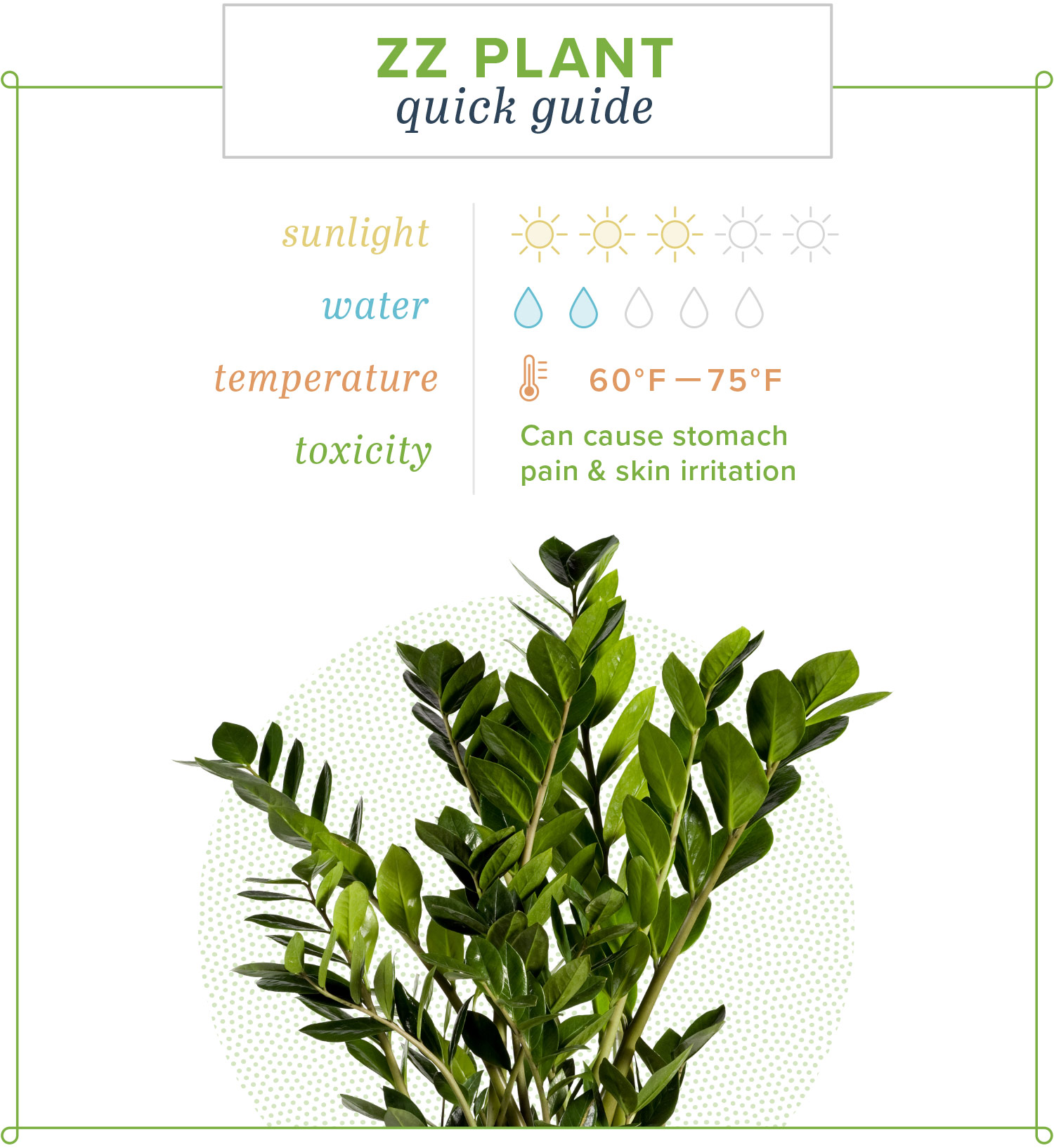 ZZ Plant Care Guide: Growing Information and Tips | ProFlowers on Zz Plant Care  id=52210