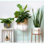 Diy Plant Stand Tutorials 3 Creative Hardware Hacks Proflowers Blog