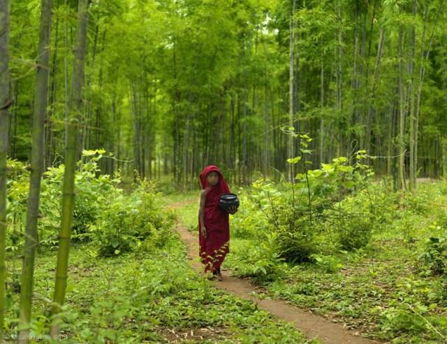 Hasil gambar untuk myanmar forest