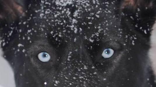 Merlin, blue eyes closeup 2