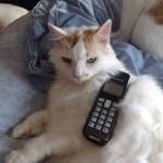 Sazar kitty making a phone call