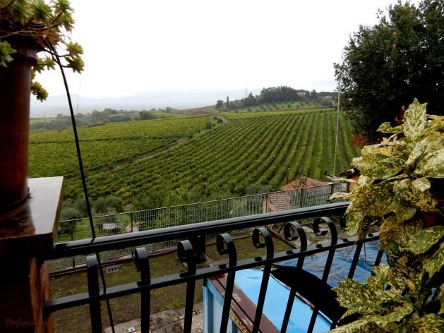 I vitigni de La Cerquetta