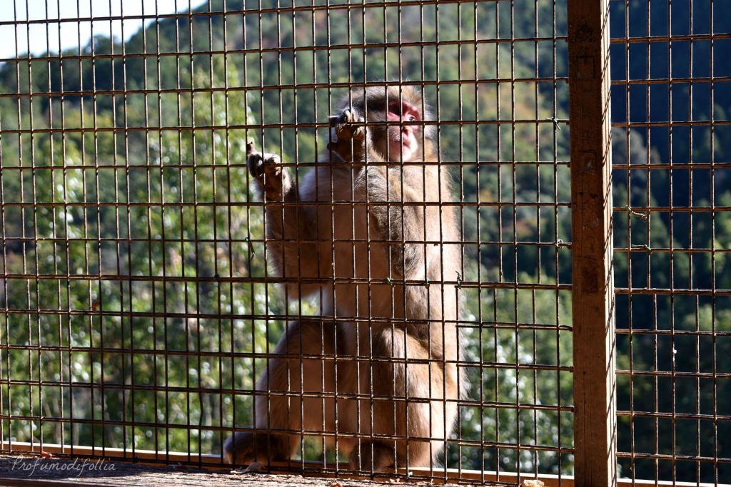 Visita ad Arashiyama: un macaco appeso alla rete
