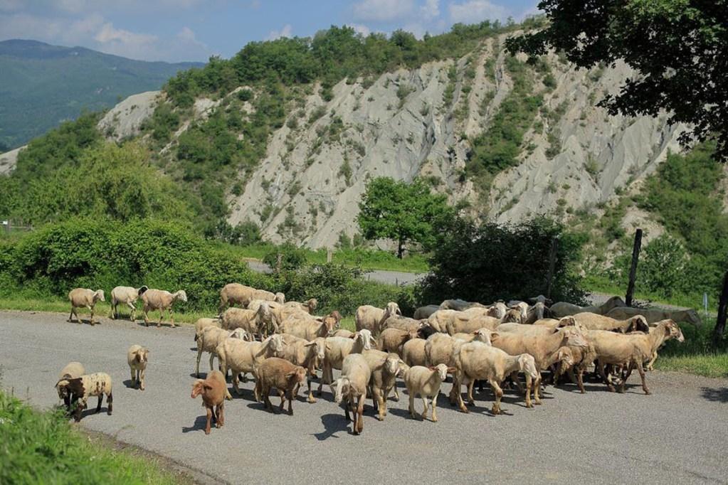 Associazione progetto idea Chiusi della Verna - società agricola canvecchio 2