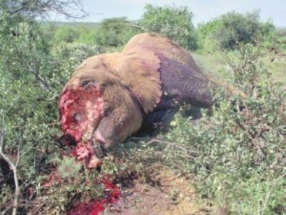 animale mutilato