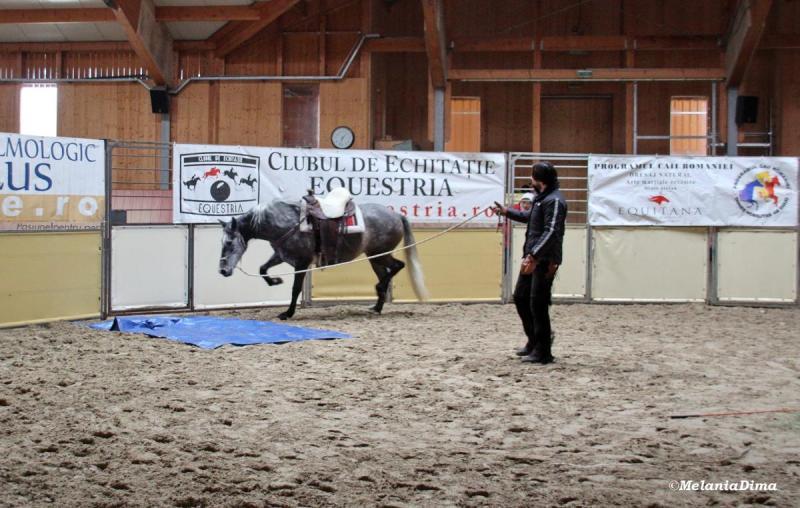 Deburajul cailor cu Denis Stefan 00101 (61)