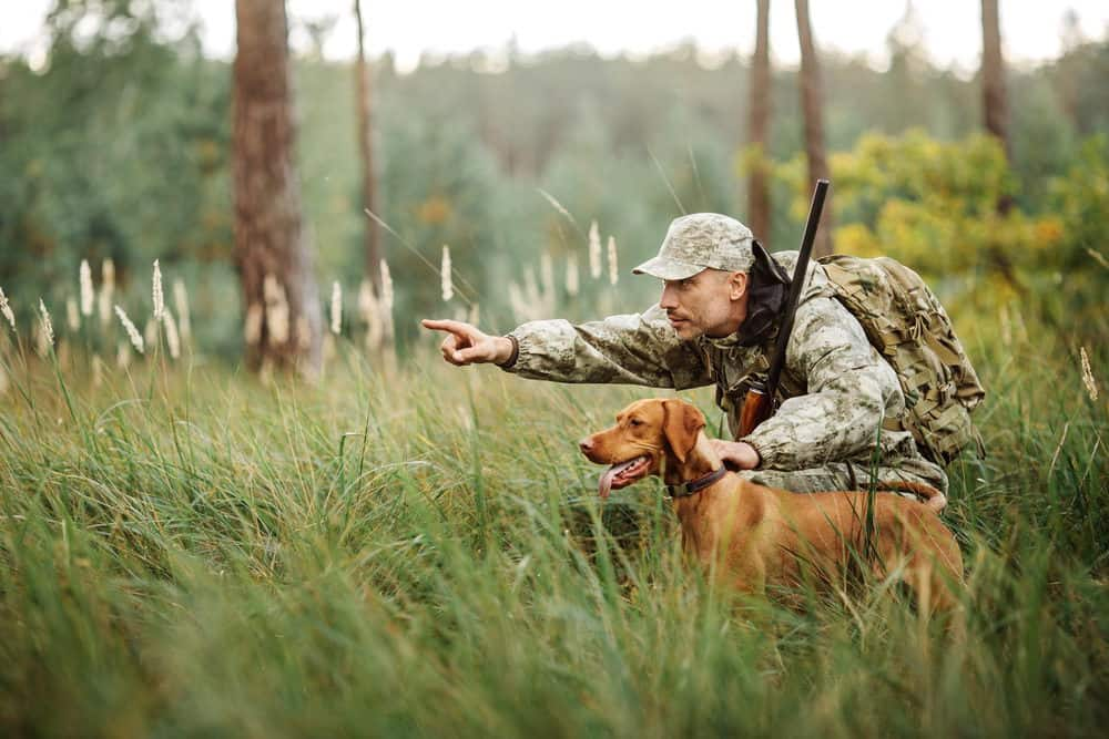How to Train Dog for Hunting