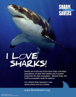 lovesharksposter