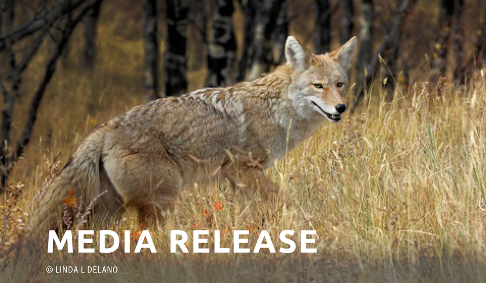 "Coalition of Scientists Condemn ""Georgia Coyote Challenge"""