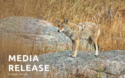 National Coalition Calls on the Huntington to End Cruel Coyote Snaring Program