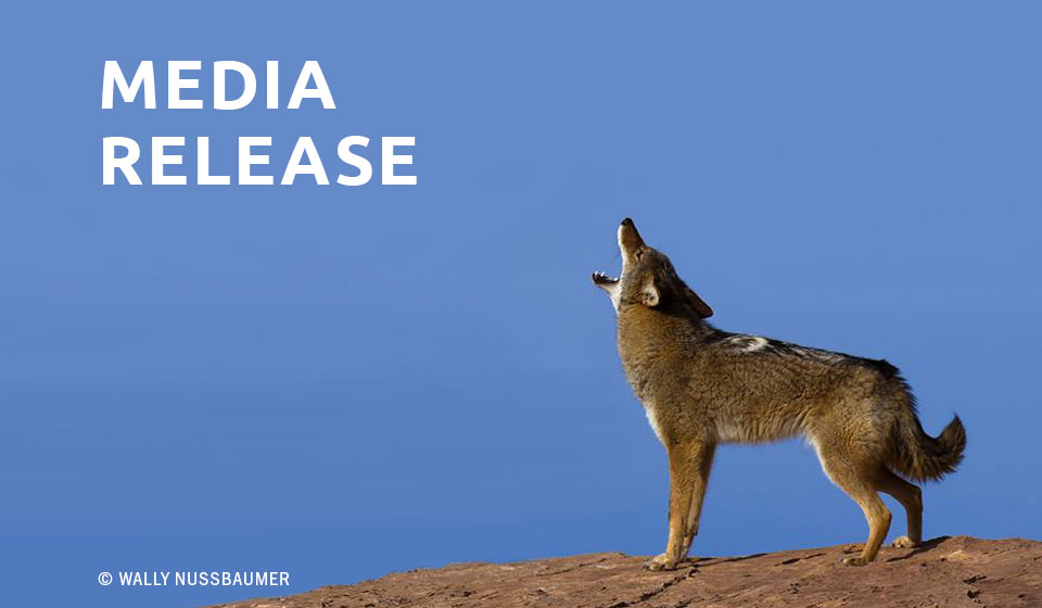 Coyote Documentary — San Francisco ~ Still Wild at Heart — to air on KQED-TV San Francisco Bay Area