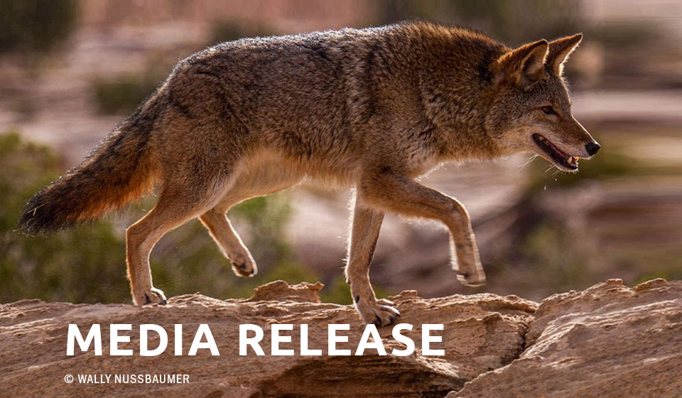 With Lawsuit Pending, Feds Cancel Idaho Predator-killing Derby on BLM Lands