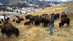 Photo: Bison Quest Adventures on the Wild Echo Bison Ranch, www.bisonquest.com