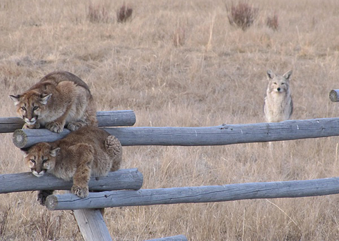 Counties Urged to Sever Ties With 'Rogue' Federal Wildlife Agency