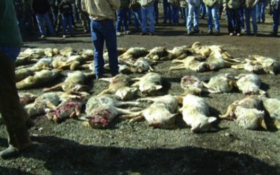 ACTION ALERT: NM Residents – Help Ban Coyote Killing Contests in New Mexico