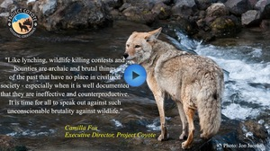 ACTION ALERT: Help Ban Wildlife Killing Contests in California